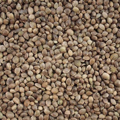wholesale seed bulk buy hemp seed 15 kg for bird feed fishing bait