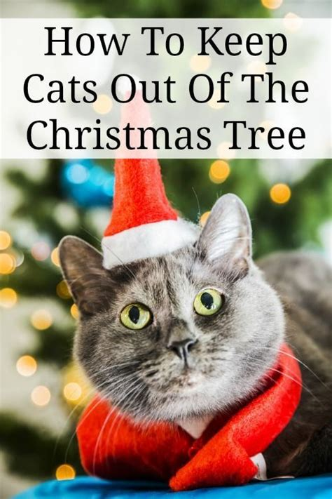 how to keep cats out of the christmas tree how to keep cats out of the tree pets clean it make it cook it cats