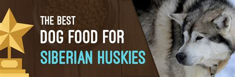 best food for siberian husky puppy best food for siberian husky recipes food
