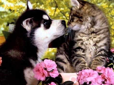 Dogs Wallpaper by Des Chiens Trop Mignons Youtube