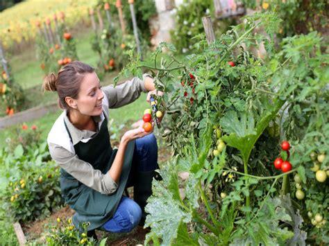 Gardening Advice Tips For Kitchen Garden Boldsky