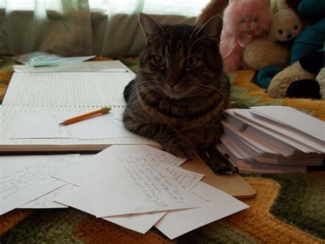 Cat Essay Writer by About The Author The Cat S Cradle