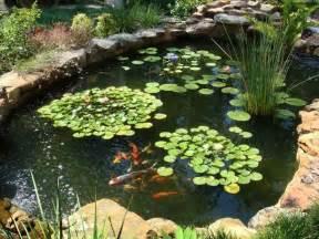 pictures of fish ponds in backyards costruire un laghetto piante acquatiche come costruire