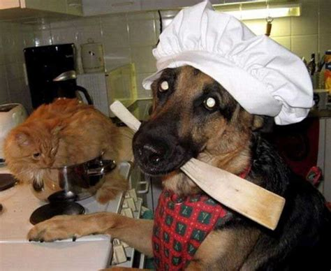 Dogs In The Kitchen Food by Irti Picture 587 Tags Cooking Cat Chef Kitchen