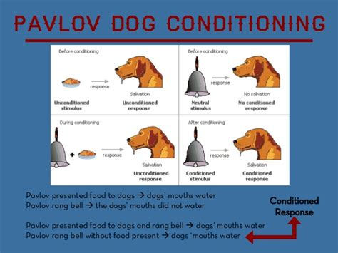 pavlov experiment classical conditioning in the classroom