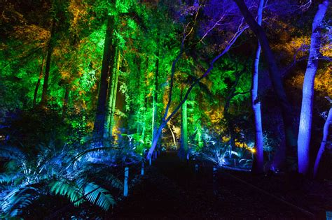 enchanted forest  light     los angeles