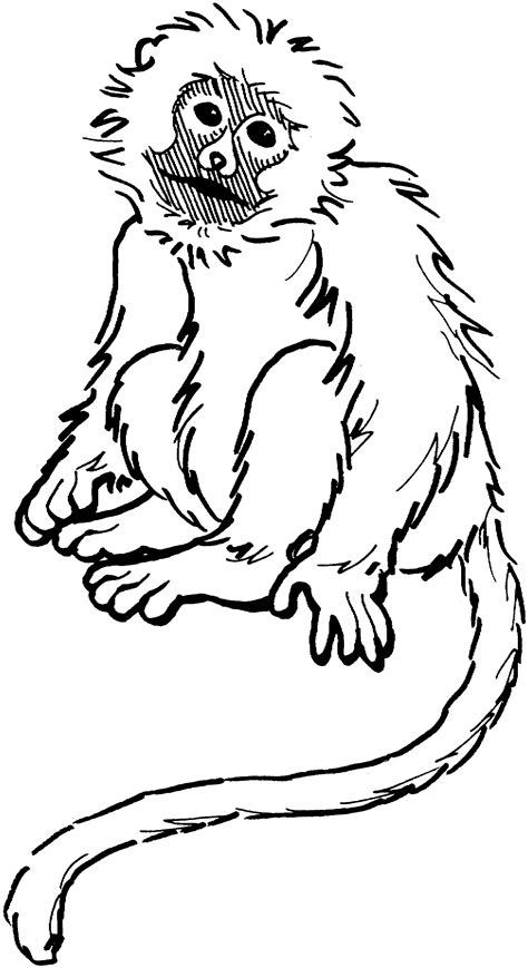 Free Printable Monkey Coloring Pages For Kids Free Coloring Pages