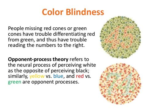color blindness definition psy 150 403 chapter 6 slides
