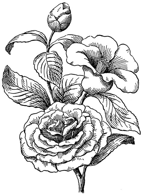 camellia flower tattoo camellia flower cliparts co