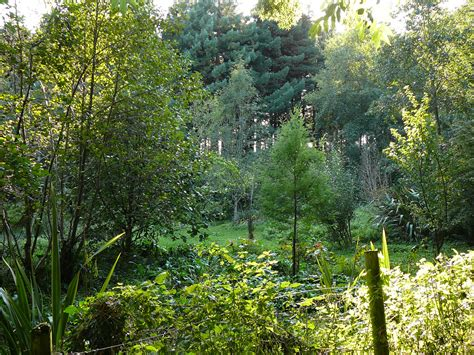 Garden Forest by About Permaculture Permaculture Musings For Cold Climates