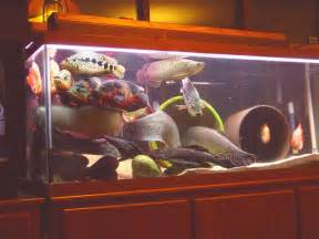 An overstocked aquarium is an aquarium that either has too many fish