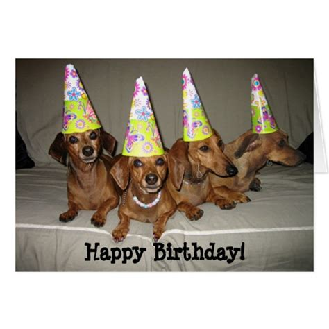 Dachshund Birthday Meme - happy birthday dachshund greeting cards zazzle