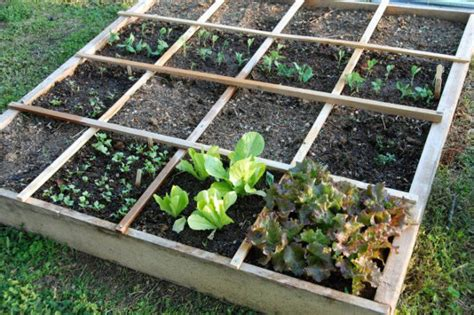 square foot vegetable garden layout vegetable garden layout rows square foot or