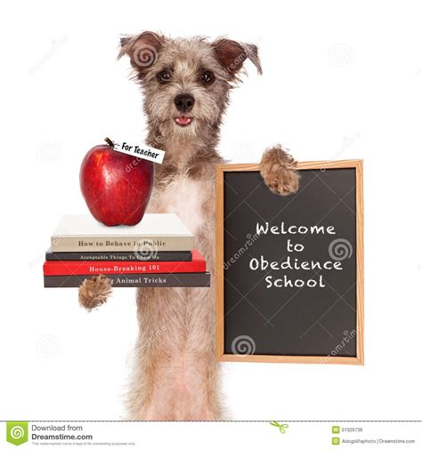 obedience school for dogs obedience school stock photo image 51329736