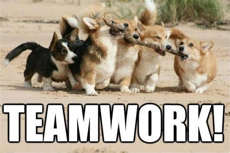 Teamwork Meme - the gallery for gt teamwork meme