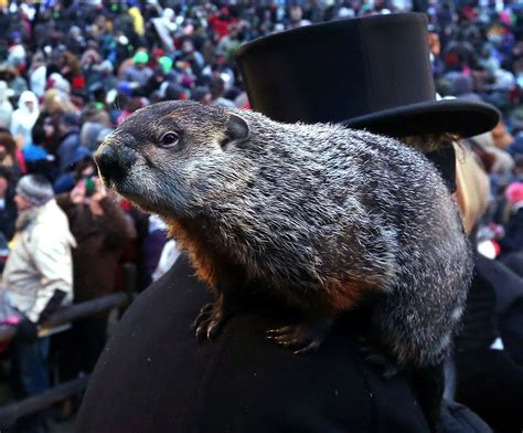 groundhog day years groundhog day 2015 punxsutawney phil sees shadow
