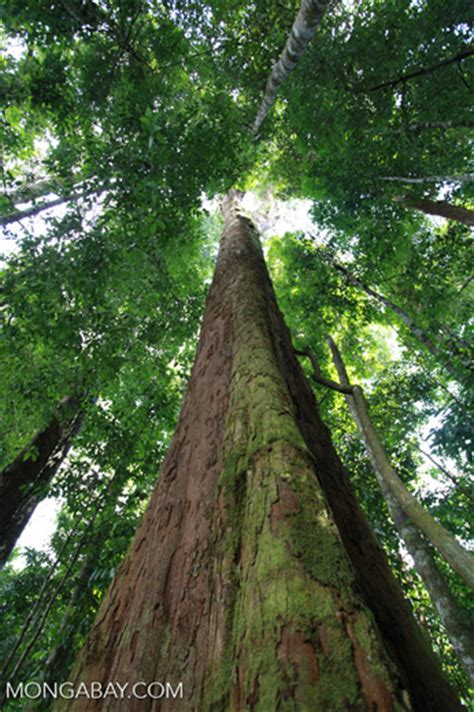 rainforest conservation may be aimed at the wrong places