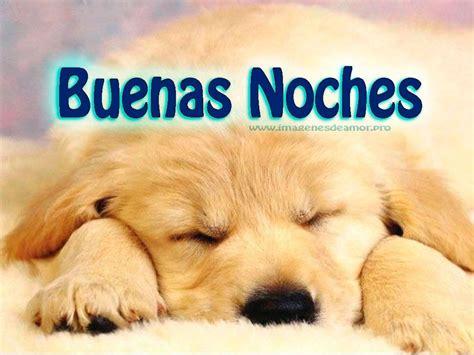 imagenes y frases de buenas noches que descanses im 225 genes de perritos tiernos con frases de buenas noches