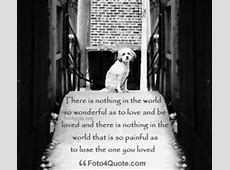 When A Dog Dies Quotes. QuotesGram Jane Goodall Death