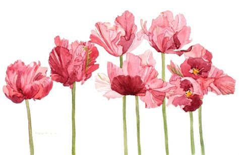 pink parrot tulip field watercolor by wandazuchowskischick