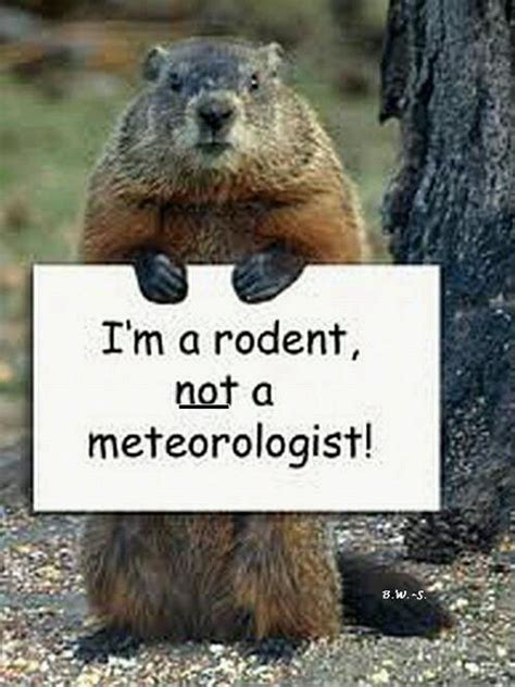 Groundhog Meme - groundhog day funny quotes memes