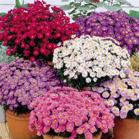 fiori economici fiori economici di matrimonio sposiamocirisparmiando it