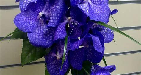 come bagnare le orchidee vanda orchidee orchidea vanda