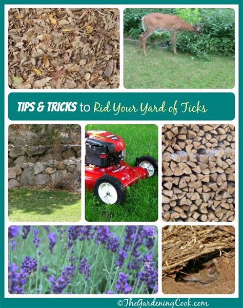 backyard tick control 25 best ideas about leveling yard on pinterest brick