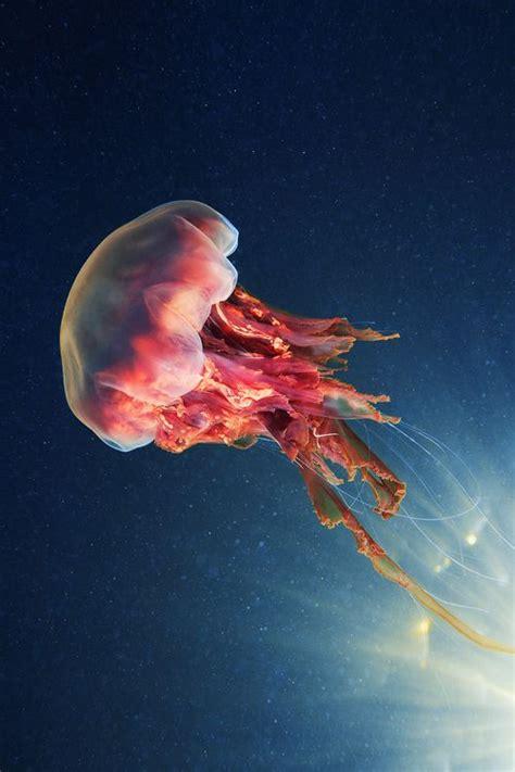 images  jellyfish pics  pinterest beautiful posts  underwater