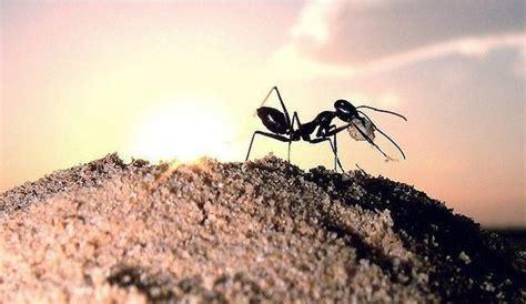 acabar con hormigas en casa acabar con hormigas en casa acabar con las