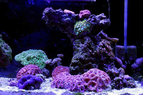 aquarium lunar led lights aquarium moon lights on winlights com deluxe interior