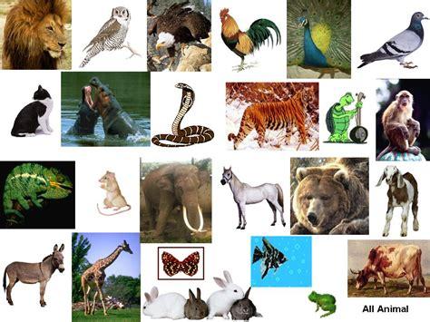 belajar spirit dari sifat sifat hewan lutfi s site