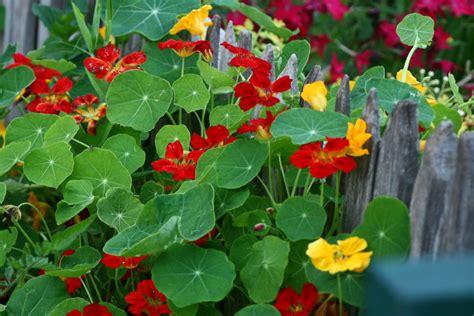 edible backyard plants episode 216 edible landscaping growing a greener world 174