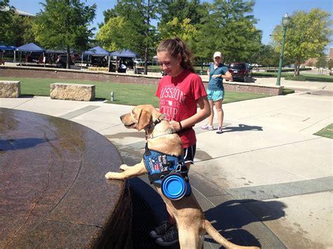 service puppy raiser puppy raiser program teaches and service blue ribbon news