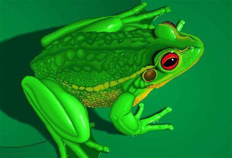 imagenes de ranitas verdes dibujo rana verde imagui