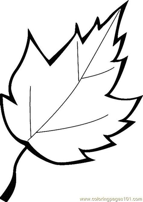 leaf identification coloring pages best 25 leaf coloring ideas on pinterest leaf coloring