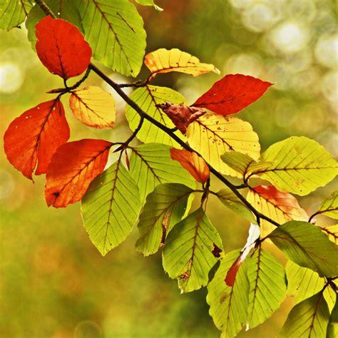 Herbstlaub Garten by Herbstlaub Entfernen Und Verwerten Bei Westfalia Versand