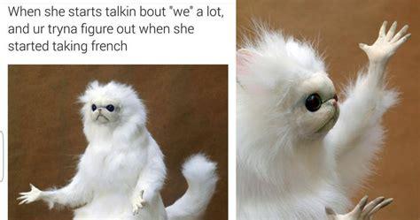 White Cat Meme - 15 hysterical persian cat room guardian memes that will