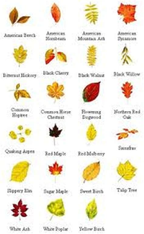 printable leaves and names inkspired musings autumn leaves budget crafts coloring