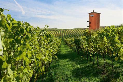 vini pavia fontana candida vendita vini enoteca pavia