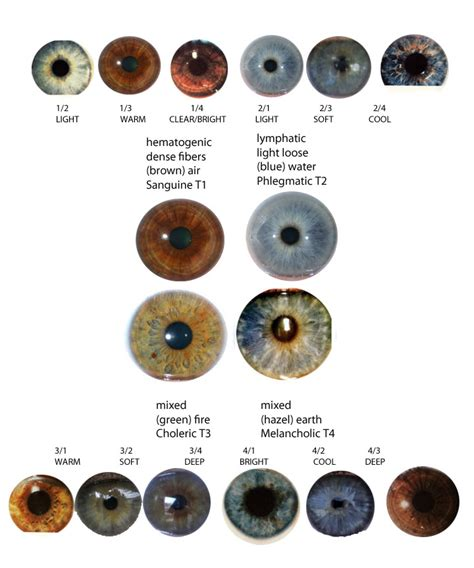 different types of eye colors expressing your eye types iridology