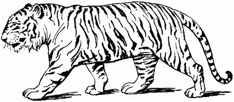 tag tiger coloring pages for preschool coloring page kids