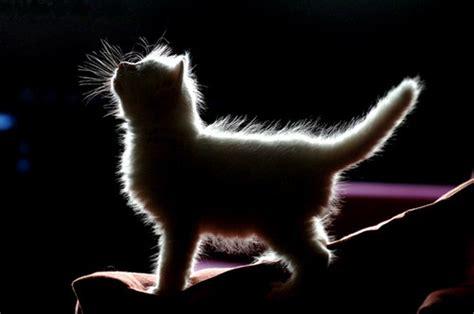 lights cat animal animals back light cat kitten image