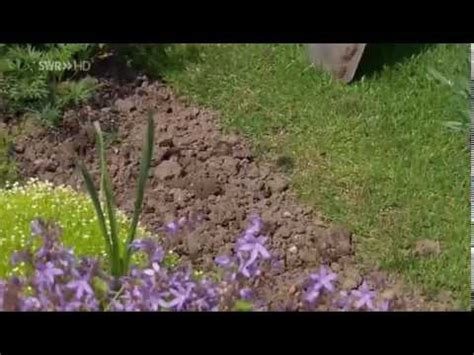 wann schneide ich hortensien wann und wie schneide ich lavendel doovi