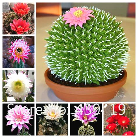 biggest online plants store aliexpress com buy 17 kinds of cactus the worlds rarest