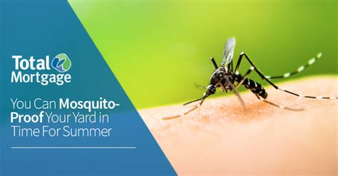 mosquito proof backyard you can mosquito proof your yard in time for summer