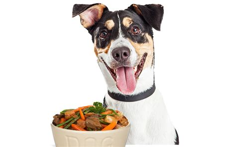 are green beans bad for dogs can dogs green beans a food safety guide from the happy puppy site