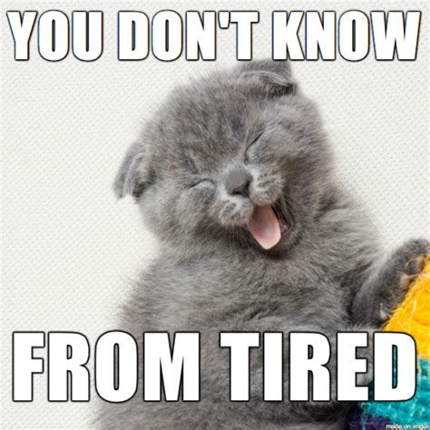 Tired Cat Meme - image tired meme download