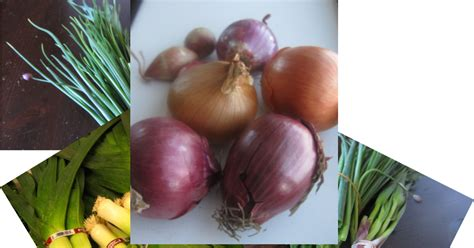 matrixtxri onion askruth onions of all shapes and sizes