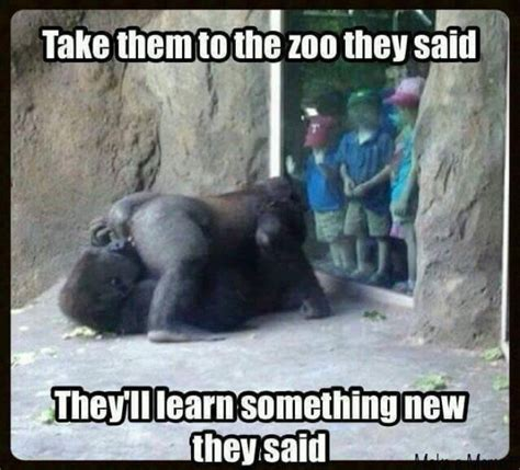 Dirty Sex Memes - funny zoo meme jokes memes pictures